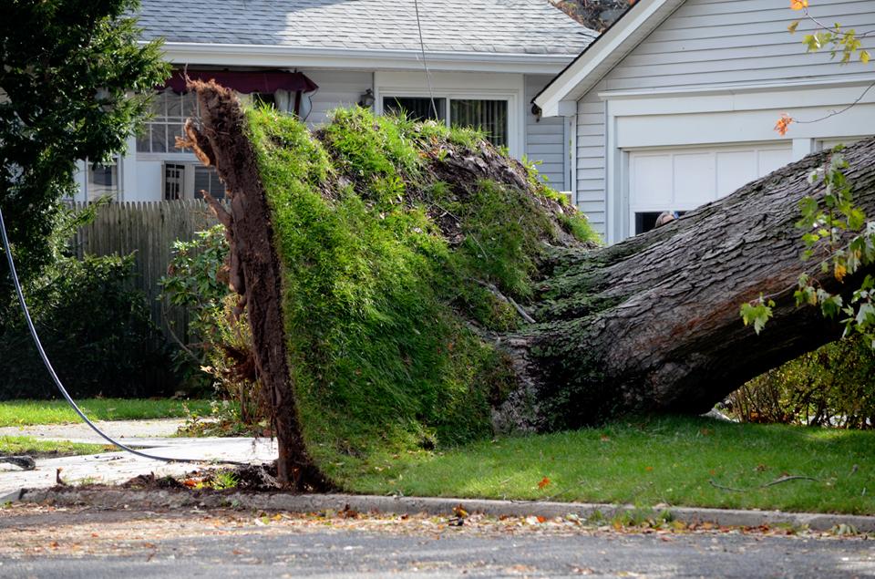 Uprooted Tree.jpg