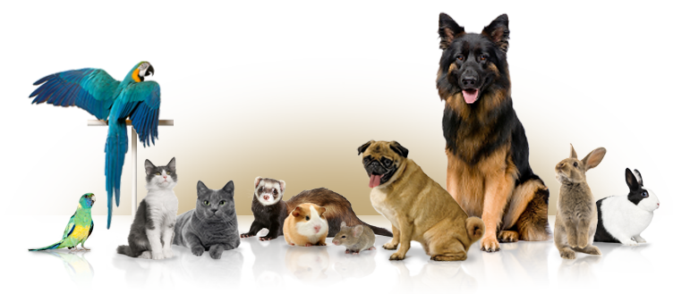 Rental Properties And Pets